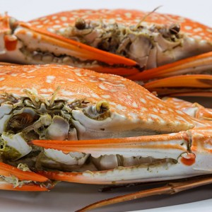 crab licence