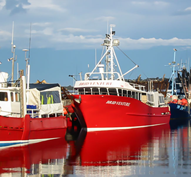 About Us | Seavine Marine